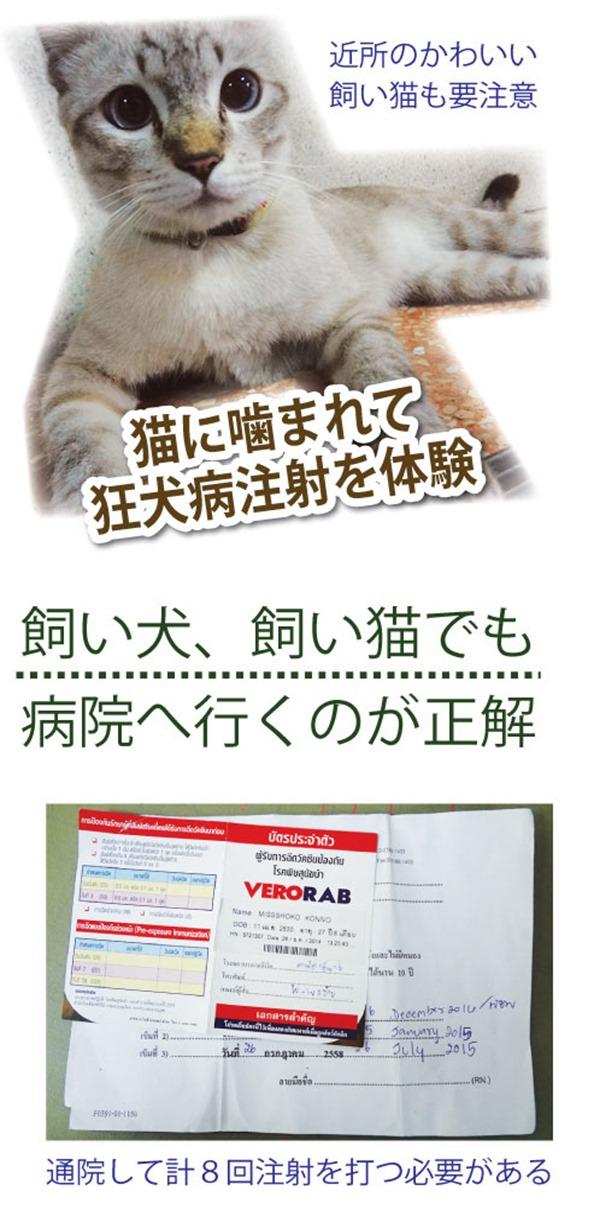 猫に噛まれて 狂犬病注射を体験