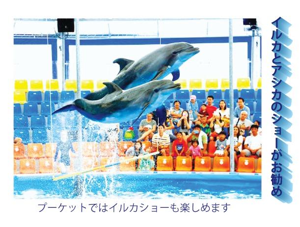 イルカとアシカのショーがお勧め