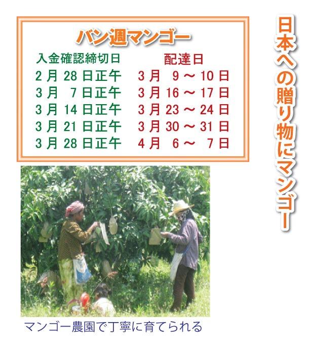 日本への贈り物にタイ国ナンバーワンの販売実績を誇る「バン週マンゴー」
