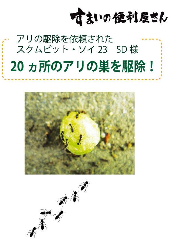 20ヵ所のアリの巣を駆除!アリの駆除を依頼された スクムビット・ソイ23 SD様