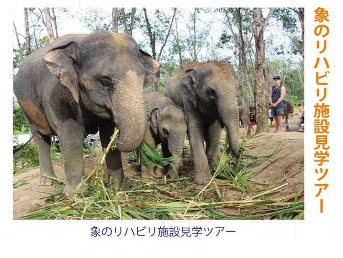 「プーケット旅行センター」で象のリハビリ施設見学ツアー