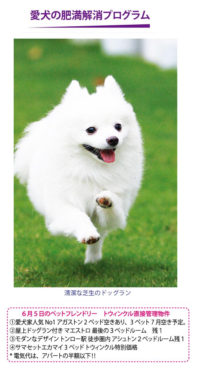 トウィンクル動物病院の愛犬の肥満解消プログラム