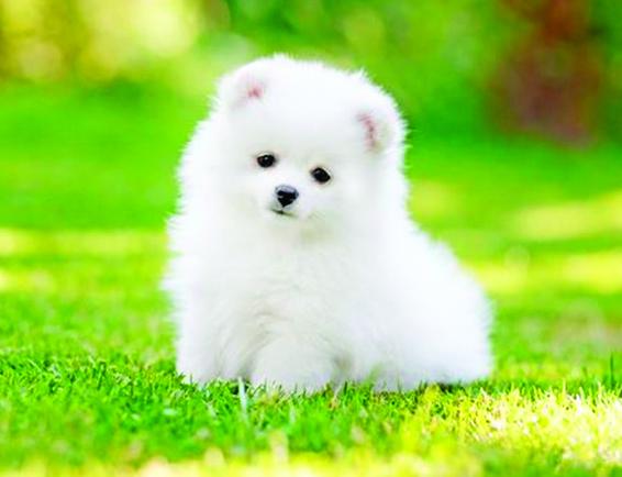 かわいい仔犬にも会えます