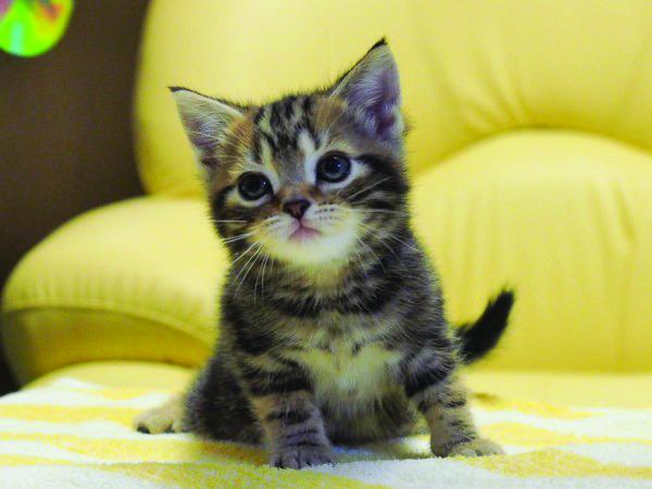 セミナーではかわいい仔猫に会えます
