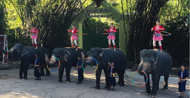 子どもが喜ぶ象のショー