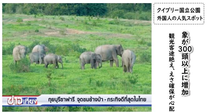 クイブリーサファリの野生象 (タイローカル番組で)
