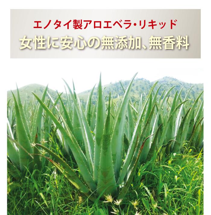 アロエベラはチェンマイで栽培