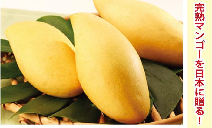 「バンコクマンゴー」で完熟マンゴーを日本に贈る!