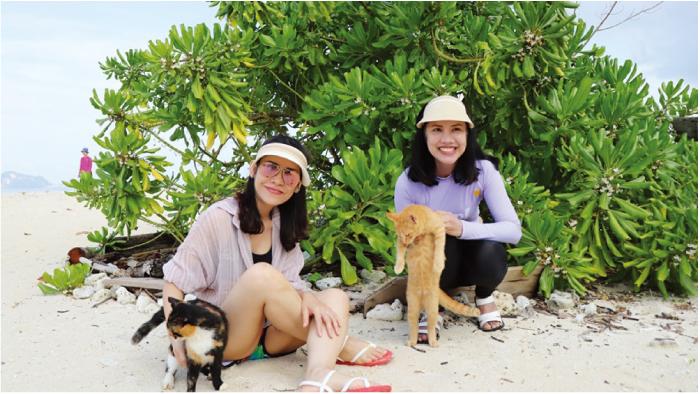カイナイ島は猫がたくさんいます