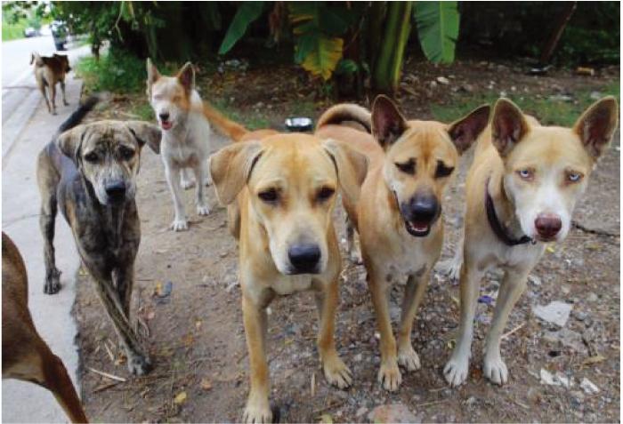 タイは野良犬天国!殺処分なく生涯保護