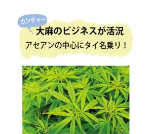 カンチャーの葉
