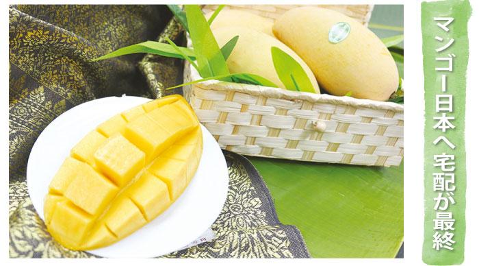 「バンコクマンゴー」マンゴー日本へ宅配が最終