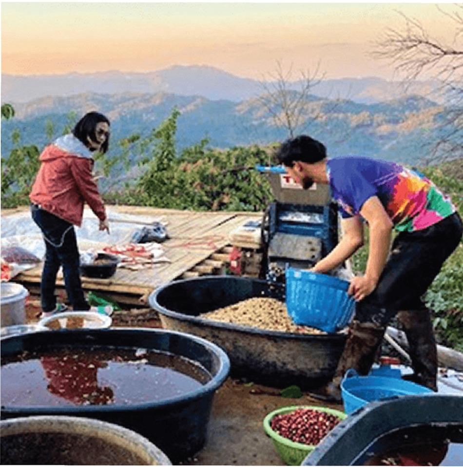 メーチャン村で収穫したコーヒーの実を洗浄